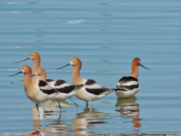 Water and Birds in the Arid West: Habitats in Decline