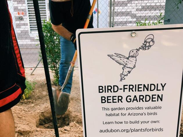 Arizona's First Bird-Friendly Beer Garden
