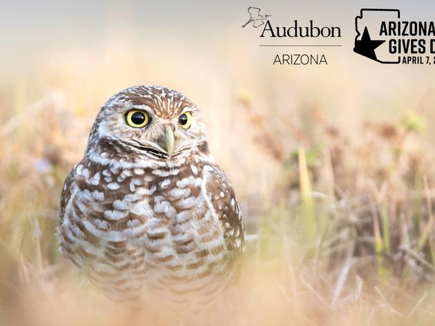 Audubon Arizona to Participate in Arizona Gives Day on April 7, 2020