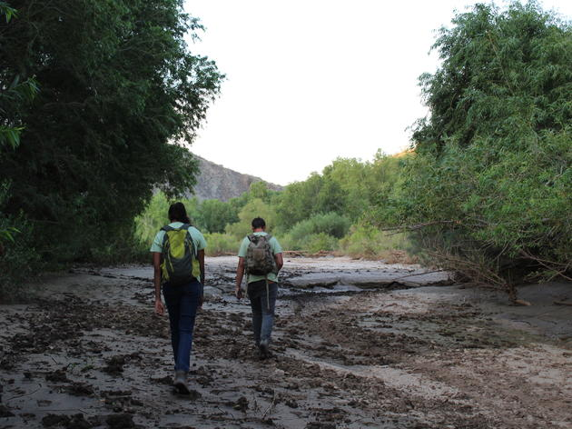A Year of Conservation Success With Arizona's Important Bird Areas