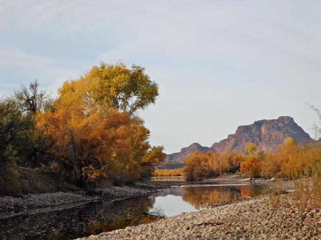 Audubon, Brewers, National Forest Foundation, and Northern Arizona University Team Up on Salt River Restoration Project