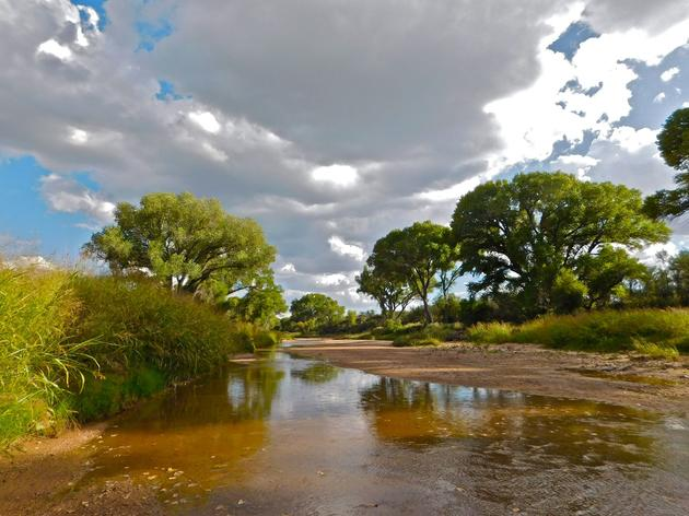 Arizona's Water Future Doesn't Have to be a Scary One for Birds