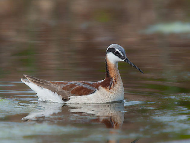 How Flexible Water Management could Benefit both People and Birds