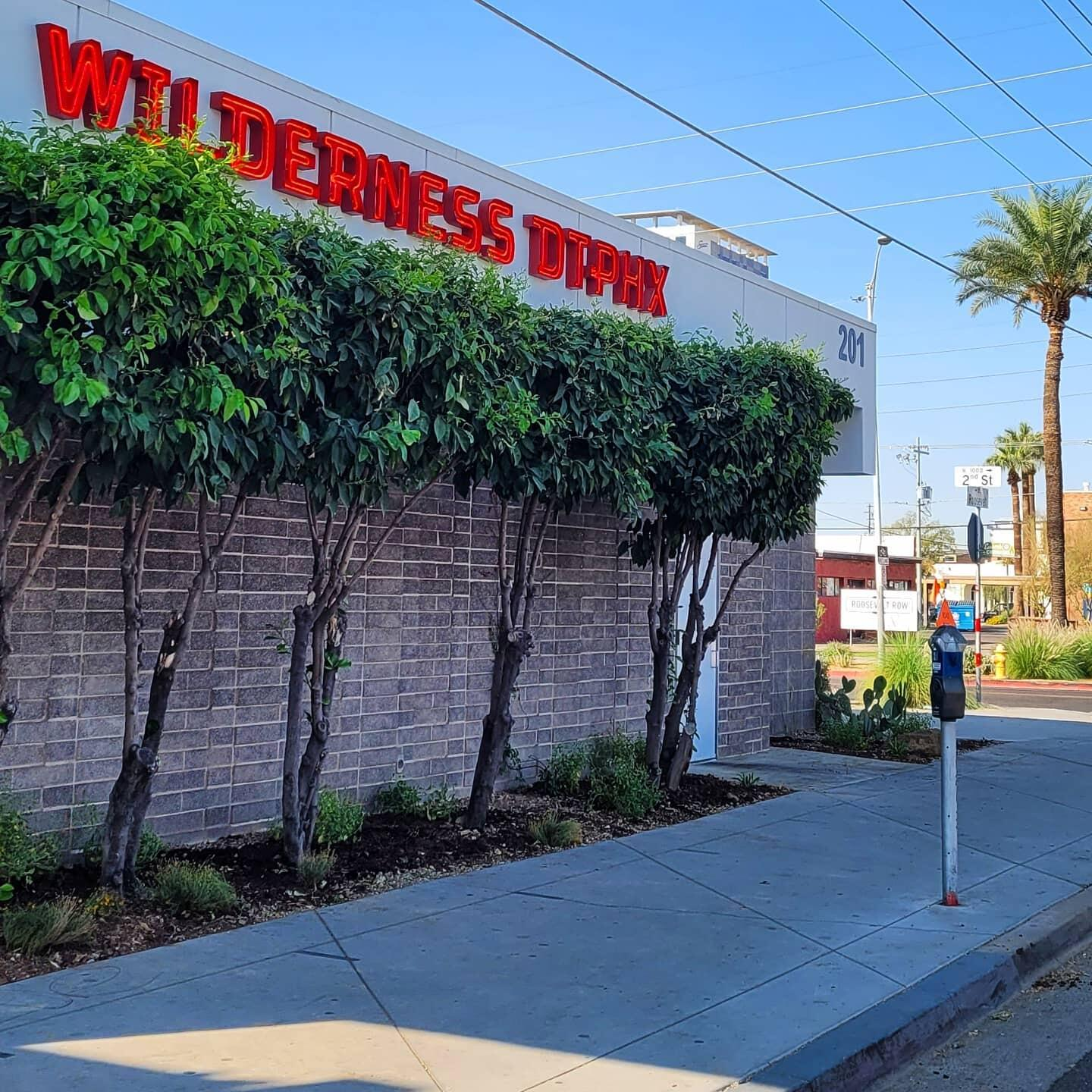 Arizona Wilderness Brewing Company's storefront on Roosevelt Avenue, now packed with native plants!