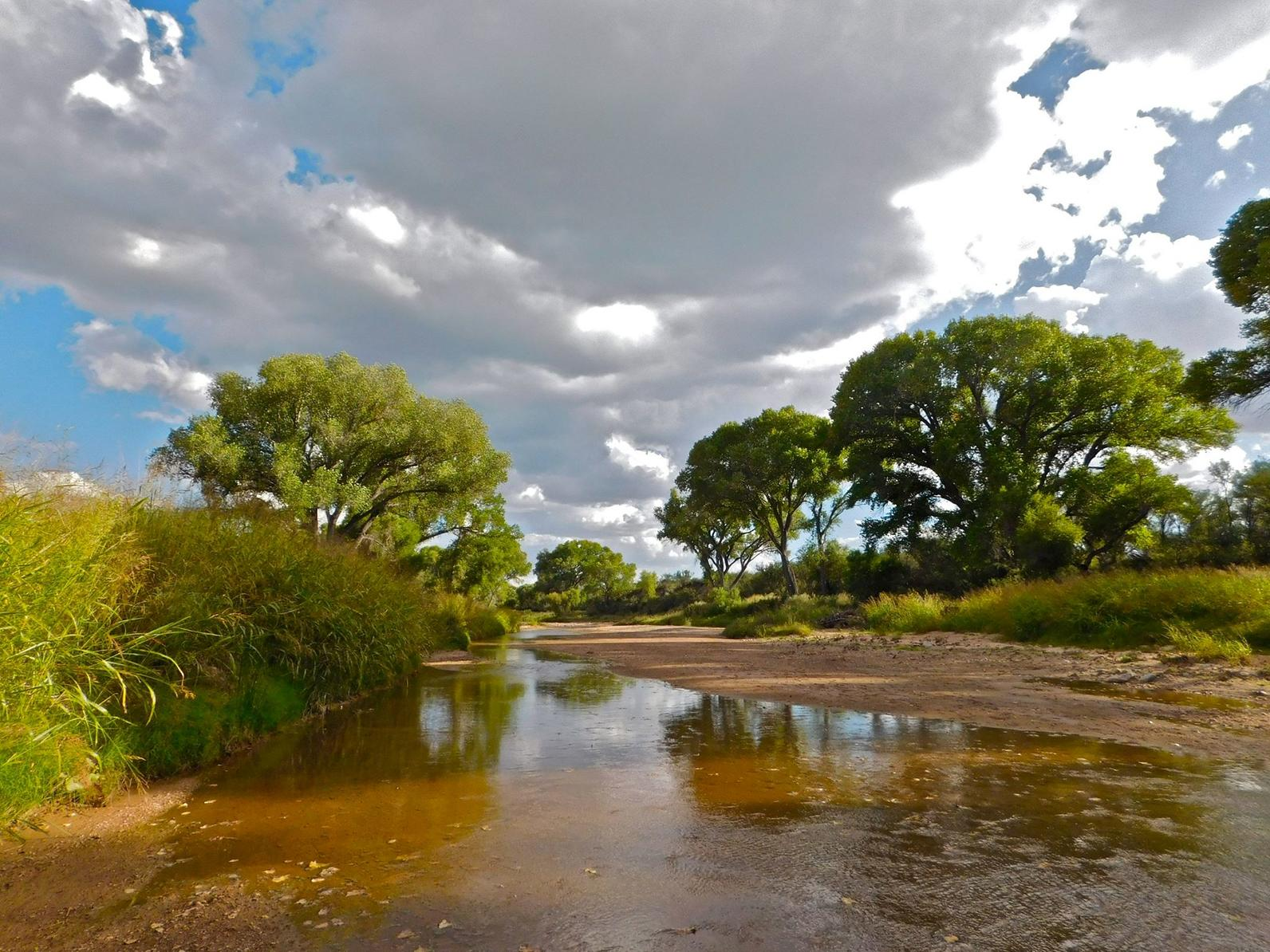 San Pedro River cottonwood/willow forest under cloudy skies.