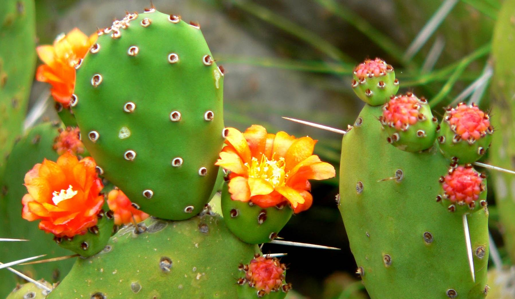 Top 10 Bird Plants In Central Arizona